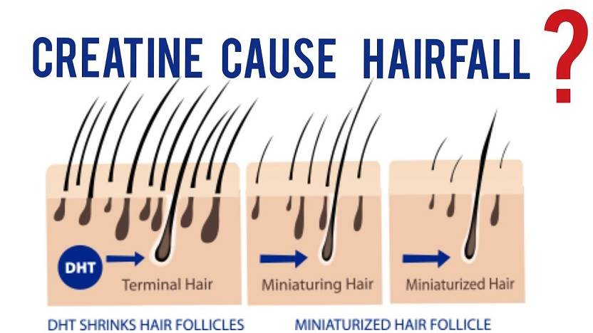 creatine hair growth